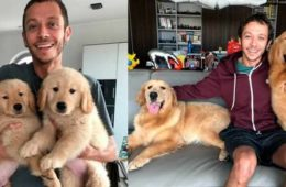 Les Golden Retrievers de Valentino Rossi